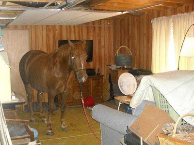 Horse-in-basement
