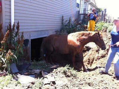 Horse-summer-rescue